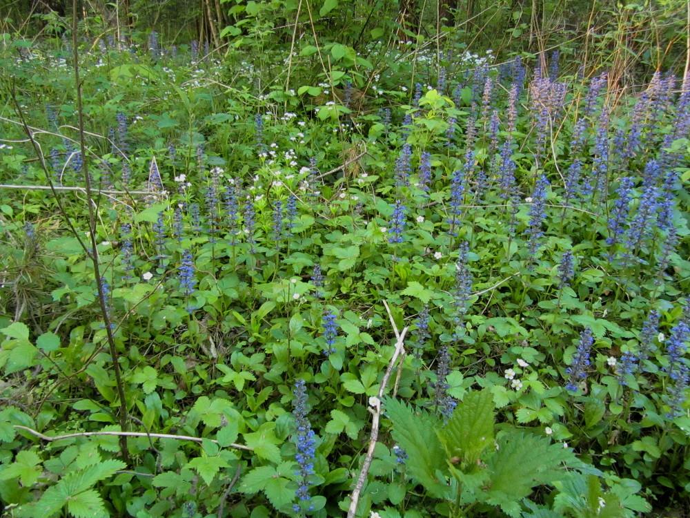 jede Menge essbare Wildpflanzen